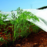 1,6m x 10 m nonwoven crop cover plant frost protection fabric insect netting